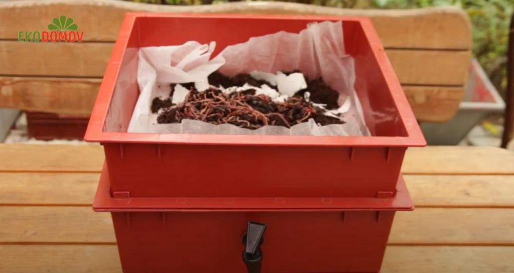 Žížaly v kompostéru